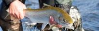 sea trout fishing