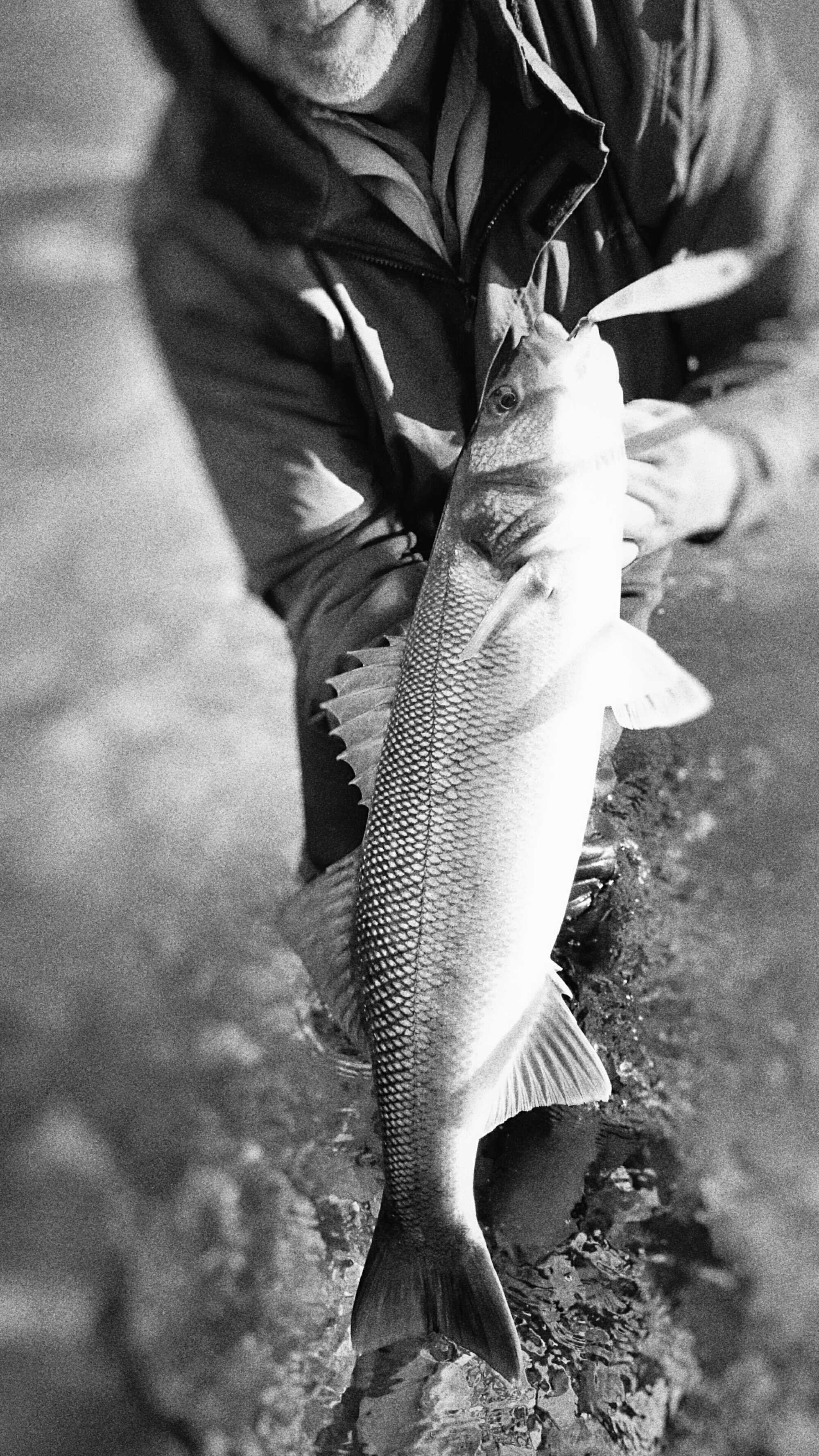 bass fishing in Wexford