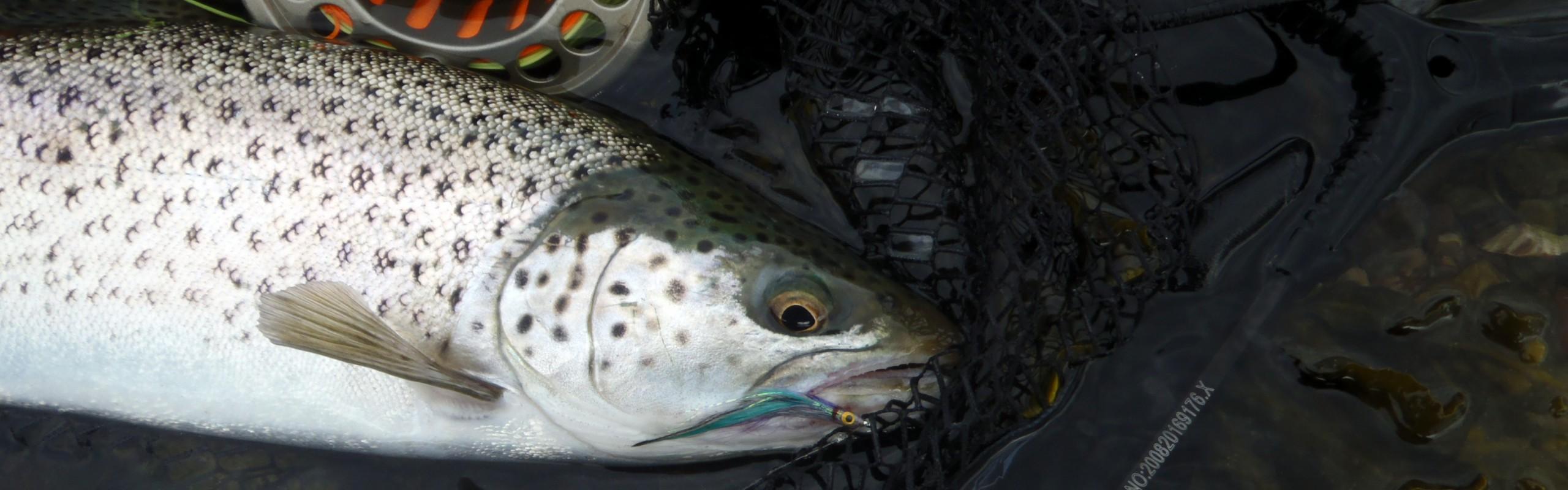 sea trout fishing Jim Hendrick