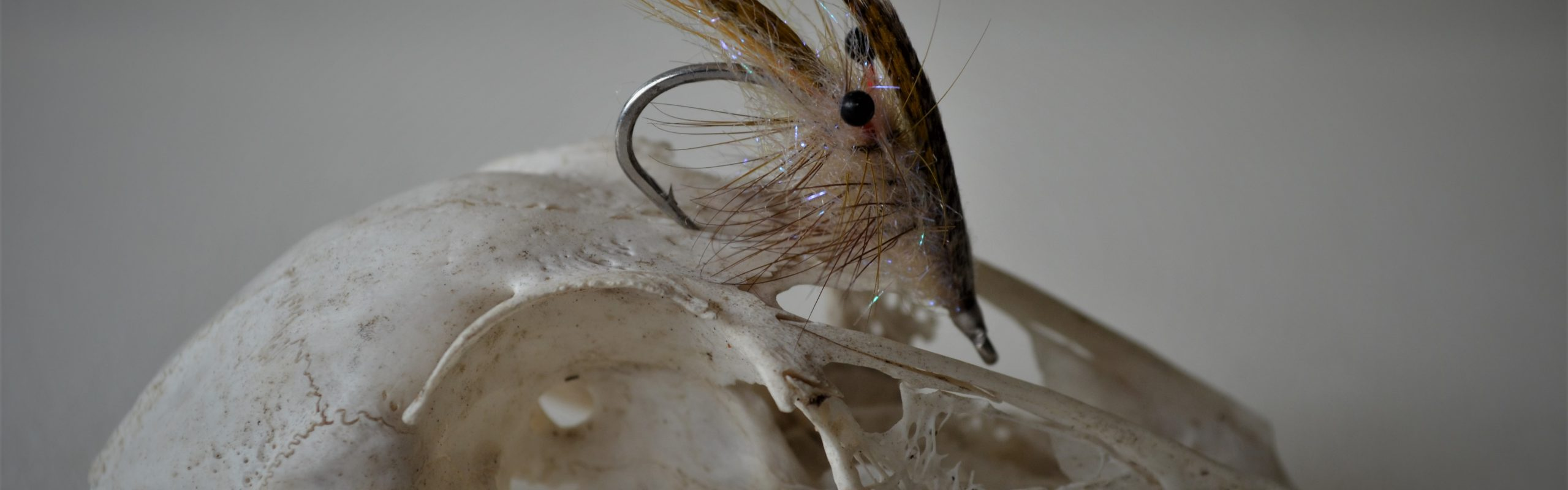 Fly fishing for sea trout